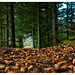"""Forrest path-5250145 • <a style=""""font-size:0.8em;"""" href=""""http://www.flickr.com/photos/76591138@N05/34119831084/"""" target=""""_blank"""">View on Flickr</a>"""