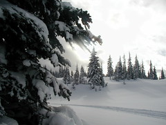 CAN YOU IMAGINE BEING HERE?  POWDER SNOW...LOVELY TRAIL...JUST THE BEST!  REVELSTOKE,  BC. (vermillion$baby) Tags: blackandwhite brookmere done forest fun highcountry ice snow snowmobiling trees treestree tulameenarea winter snowf revelstokef