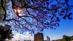 Tú dímelo (Momoztla) Tags: mexico momoztla arbol tree sol sun sky clouds nubes unam cdmx cu ciudad universitaria rectoria biblioteca