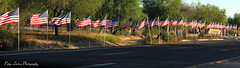 Memorial Day (Paige Larissa Photography) Tags: memorial day veteran military respect cemetary remember usa united states america honor flags flag