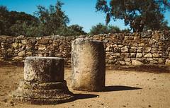 Romani Sumus (Walimai.photo) Tags: cáparra cáceres extremadura spain españa nikon d7000 18105 piedra stone wall pared tree árbol olivo olive