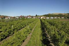 Azienda agricola Prunotto