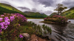 Pretty in pink... (Einir Wyn Leigh) Tags: landscape loch scotland flowers foliage mountains valley glen island sky outside trees forest water uk glenetive clouds love happy green colours waves wind style river scottishhighlands