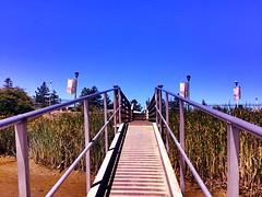 sketchy bridges #petaluma #sunnydays #exploring #photography #landscape #nature #perspective (brinksphotos) Tags: petaluma sunnydays exploring photography landscape nature perspective