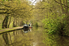 The Shropshire Union Canal (maureen bracewell) Tags: ellesmere shropshire canal spring trees longboats barges water reflections green leisure england uk cannon maureenbracewell towpath walking