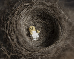 In the nest (N.the.Kudzu) Tags: home toy tabletop macro lego miniature baby pentaxk3 lensbabysweet50