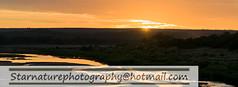 _DSC49721 copy (naturephotographywildlife) Tags: kruger wildlife scenery animals birdlife a99ii africa park sunset