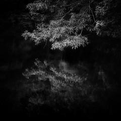 reflection (slowhand7530) Tags: nikon d800e carlzeiss makroplanart250zf makroplanar macroplanar makroplanart250 monochrome water reflection skancheli