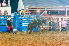 DSC_4387-Edit (alan.forshee) Tags: rodeo horse cow ride fall buck spin twirl bull stallion boy girl barrel rope lariat mud dirt hat sombrero