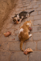 Chicken Head Feast (ellyoracle77) Tags: africa morocco marrakech medina derb cats kittens catsofmarrakech pets feeding chicken heads leftovers ginger tabby