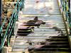 A staircase cat is staring at you. (thisismandyc) Tags: hongkong tsuenwan cat staircase shingmunvalleypark canonpowershotg11