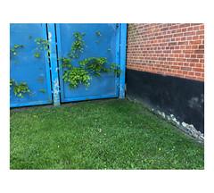 IMG_3603 (csinnbeck) Tags: aarhus denmark dk 8000 iphone 2017 fence grass red blue green black bricks wall