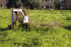 IMG_8633 (storvandre) Tags: storvandre conversano bari puglia apulia rural countryside nature landscape