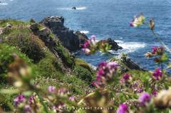 Salinas-_DSC1653 (anahí tomillo) Tags: nikond5100 nikon d5100 naturaleza nature mar sea azul blue rocas rock verde green sigma 1750f28 asturias españa spain europa europe costa coast cantábrico