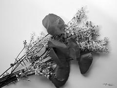 Fiori di campo (voste78) Tags: flower nature bouquet plant closeup petal white flowerhead singleflower oldfashioned blackandwhite branch beautyinnature nopeople blossom romance retrostyled backgrounds botany hasselblad biogon digitalbackcf22 stillife papaveri fiori