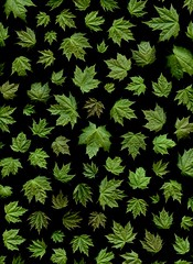 58188.01 Acer platanoides (horticultural art) Tags: horticulturalart acerplatanoides acer norwaymaple maple leaves pattern mosaic