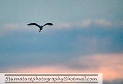 _DJA31781 copy (naturephotographywildlife) Tags: kruger wildlife scenery animals birdlife a99ii africa park