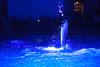 DSC01526 (Jun.Ohashi) Tags: aquaparkshinagawa aquarium shinagawa アクアパーク品川 品川 水族館 港区 東京都 日本 jp sony ソニー ilce9 α9 sonyalphaa9 a9 alpha9 tamronspaf2875mmf28xrdildasphericalifmacroa09 tamron タムロン sp 2875mm f28 di ld aspherical if macro a09