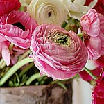 Cool iphone wallpapers - Flowers pictures for background on phone thumbnail