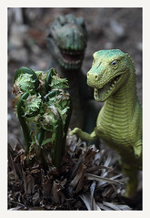 Eat! (R. Drozda (is out)) Tags: fairbanks alaska garden fern fiddlehead dinosaur spring hunger hungry plasticfantasticgrazer prehistericpets drozda