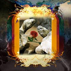Desire (mfuata) Tags: desire arzu istek gönül heart love aşk rose gül turtle kaplumbağa doğa nature