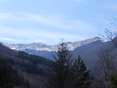 DSCN9534 (Gianluigi Roda / Photographer) Tags: springtime earlyspring march mountains woods trees snow apennines