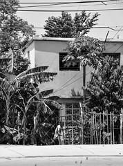 LA SEÑORA EN SU CASA - THE LADY IN HER HOUSE (alfonsomejiacampos. PLEASE READ MY PROFILE) Tags: albolesfrutales catedral plazadebolivar islademargarita porlamar venezuela
