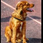 Lovely dog thumbnail