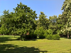 1Shot_20170604_094524 (vale 83) Tags: public garden pančevo serbia microsoft lumia 550 friends wpphoto wearejuxt coloursplosion beautifulexpression autofocus
