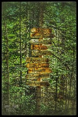 A Sign of the Times (James P. Mann) Tags: narnia magical places magic signs directions locations mystical forest trees