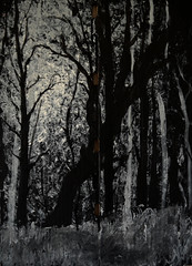 Black Forest - Cardboard (bradytreehorn) Tags: art painting canvas cardboard black white monochrome forest night light dark creepy mysterious