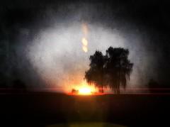 Tree (eigi11) Tags: tree sun sunset dark lensflare hss