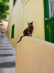 Νew friends.. (fil_____) Tags: cats cat yellow green door window spring outdoor xiaomi anafiotika plaka athens greece animal model pose αθηνα ελλαδα αναφιωτικα ανοιξη ταξιδι γατα κιτρινο πρασινο πορτα παραθυρο σκαλια steps