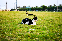 Caty Cat ! (Muhammed Fawaz Sherief) Tags: cats saudi ksa green black white street corniche eve