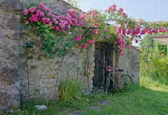 23 maggio 2017, variazioni su una bicicletta (adrianaaprati) Tags: openair outdoors garden beauty lightness spring may landscape nature lazio italy ancienthouse oldhouse roses ancientroses bicycle bike
