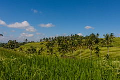 IMG_0643 (Ela&Piotr) Tags: bali indonesia indonezja jatiluwih ricefields