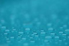 After the rain (RW-V) Tags: canoneos70d canonef100mmf28lmacroisusm rain raindrops blue bleu blauw blau gouttesdepluie pluie regen regentropfen sooc athome athomegarden 80faves 100faves 120faves 150faves 175faves 200faves 225faves 250faves 275faves 2500views 300faves 325faves