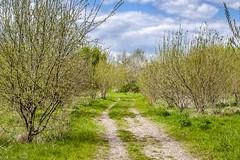 Auenlandschaft Hohenrode-April (3)