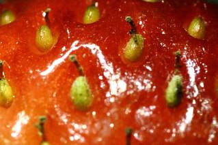 Strawberry Seeds