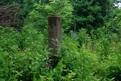 Weston Cemetery (Midnight Believer) Tags: westoncemetery graveyard headstones tombstones gravestones death crittendencounty kentucky finalrestingplace overgrown abandoned abandonment weeds rural spooky remote