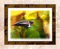 Bird's Eye (mfuata) Tags: bird kuş bakış view göz eye önemseme regard hissetmek sense endişe worry