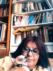 Ulf and Marianne! Dog Portrait Chihuahua Love ♥ Little Dog (maudmarianne05) Tags: dog portrait chihuahualove♥ littledog