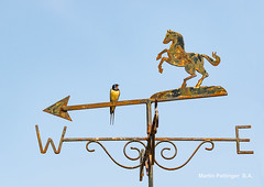 "Swallow -8225..''Are you sure Africa is that way ?? "" (martinpettinger) Tags: summertime swallows blue sky weather vane travelling enquiring africa migration"
