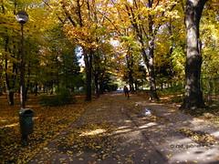 Autumn in Herăstrău Park, Bucharest (cod_gabriel) Tags: herastrau herăstrău bucureşti bucuresti bucharest bucarest bucareste boekarest bukarest park parc parculherăstrău parculherastrau romania roumanie românia autumn toamna toamnă