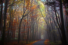 Serrahn (NPPhotographie) Tags: ature art creative oberberg npp autumn fall tree wood forest fairy fairyland road street magic magical elitegalleryaoi bestcapturesaoi aoi