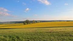 Burghaun, 25.5.17 (ritsch48) Tags: hessen deutschland rhön burghaun abendspaziergang raps