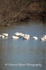 Middle Creek SWR (92) (Framemaker 2014) Tags: middle creek wildlife refuge stevens pennsylvania fish game commision lancaster county united states america