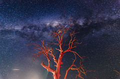 red tree (Indigo Skies Photography) Tags: milkyway galaxy galacticcentre southernsky universe stars sky tree trees nature light red blue night white green art spring landscape rural pink moon orange nightsky nikond7000 tokina1116mmf28 wideangle