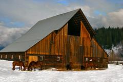 DSC_1799_TheBarn (Fraser8888) Tags: okanagan winter winters cape snow cold trees barn street fog clouds sky nikon nikond60 farmland mountains horses