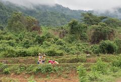 Lao 3-6110589 (luc ingelbrecht) Tags: laos vangvieng natuur tropischregenwoud